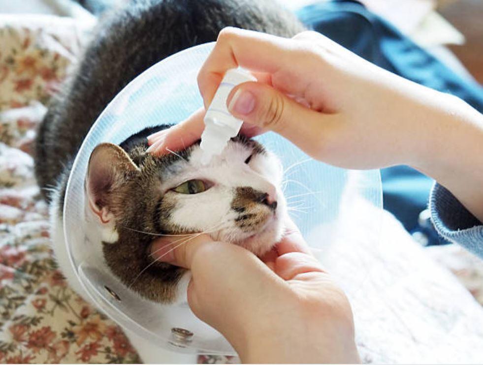 colliri naturali per gatto