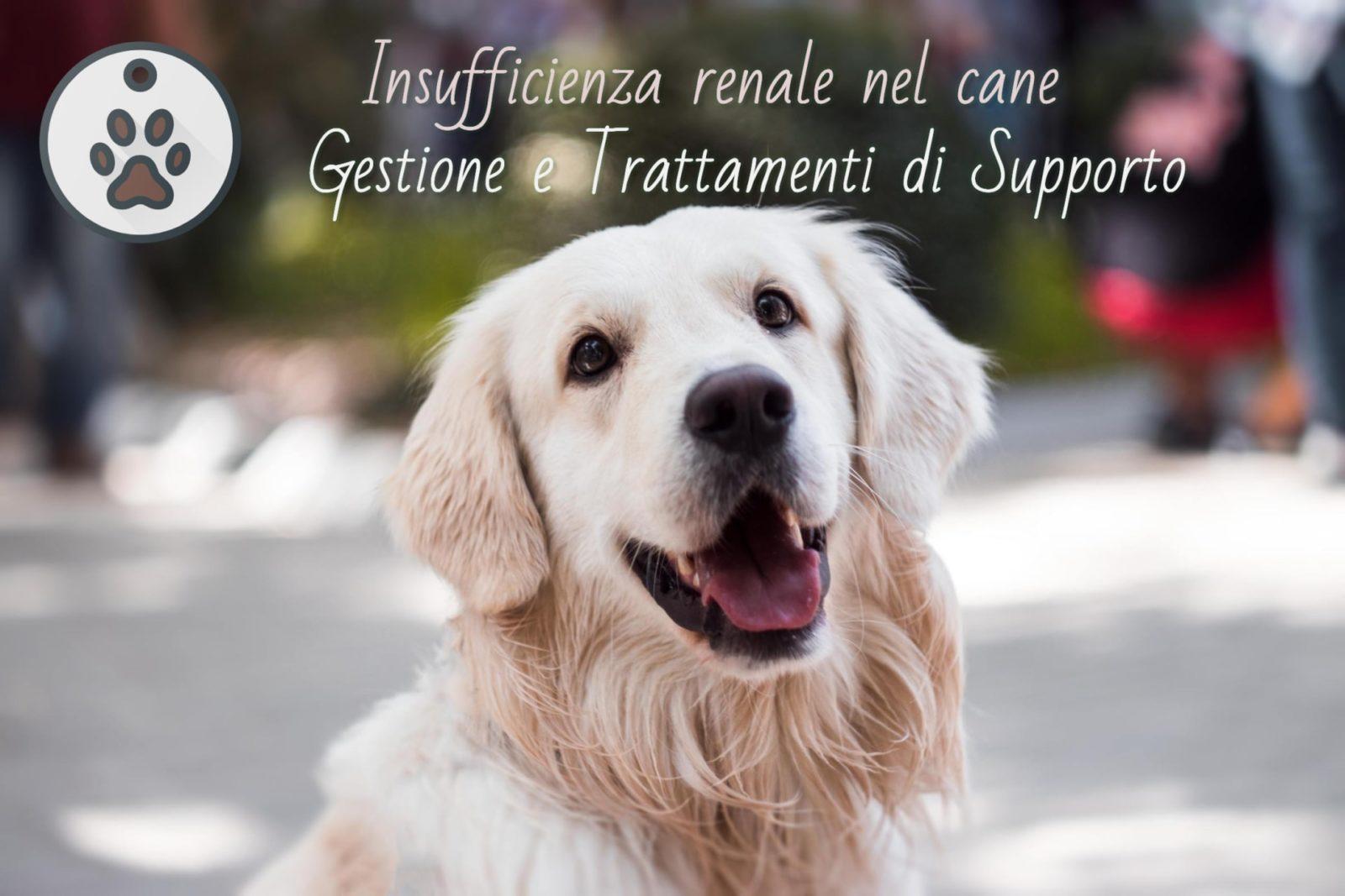 come curare un cane con insufficienza renale