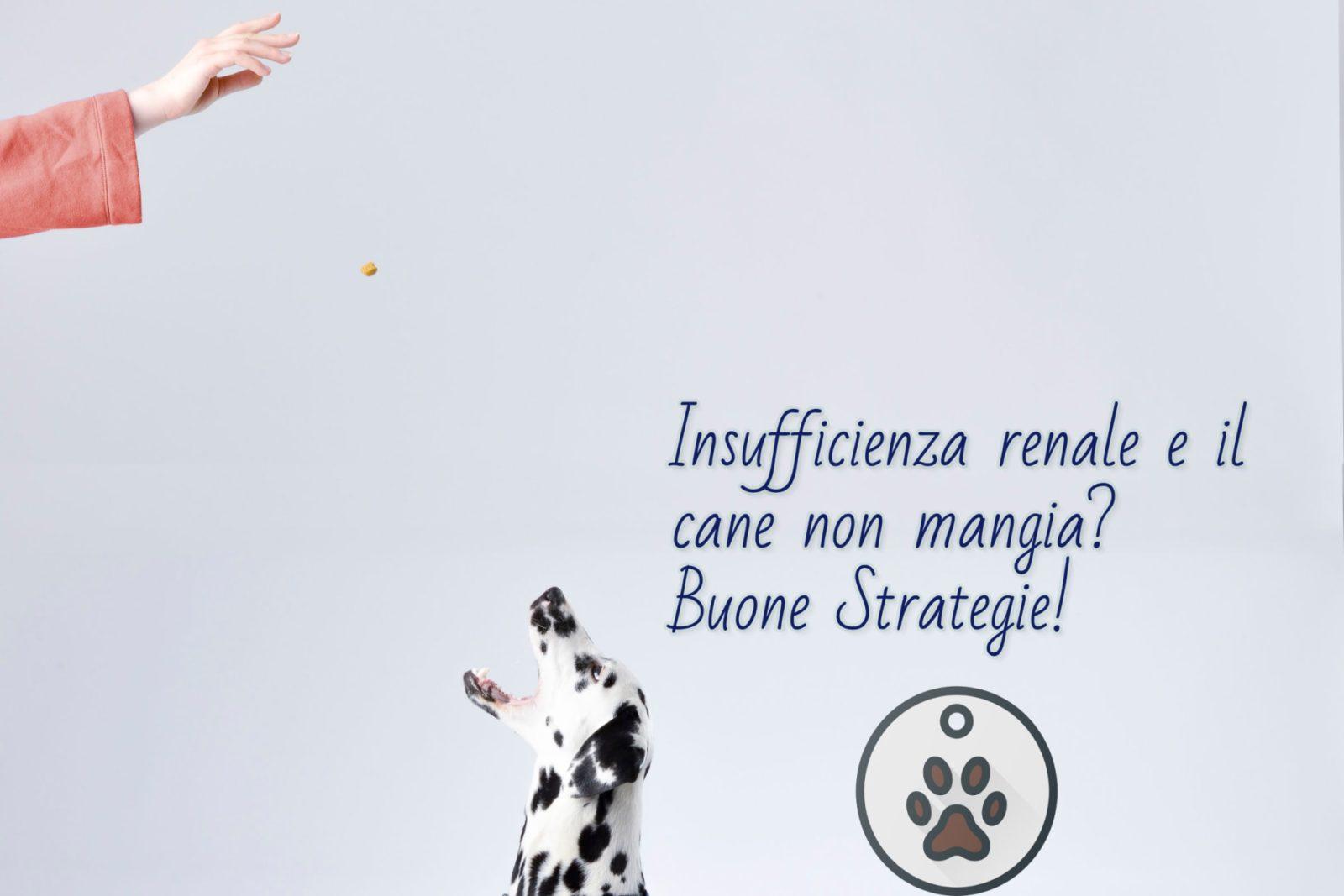 Insufficienza renale cane non mangia