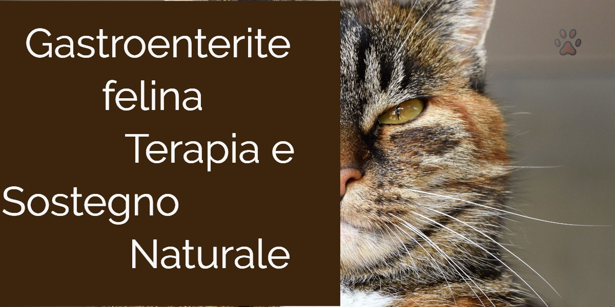 Parvovirus gatto cura