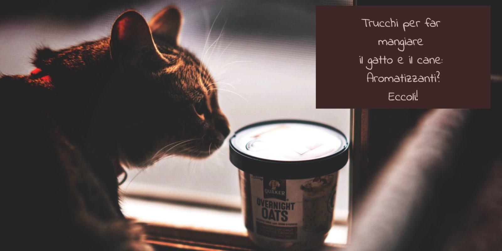 Trucchi per far mangiare il gatto