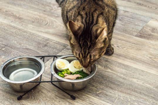 Ricette per gatto con insufficienza renale