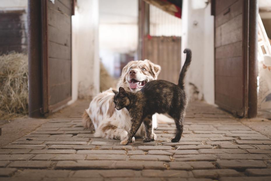 cuprum gatto cane