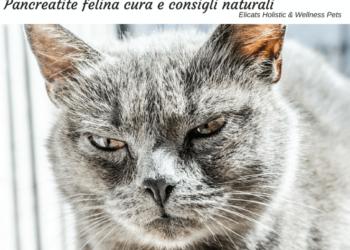 Pancreatite felina cura