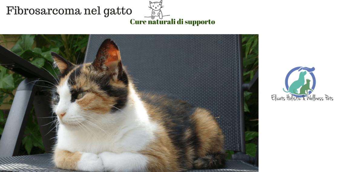 Fibrosarcoma Gatto