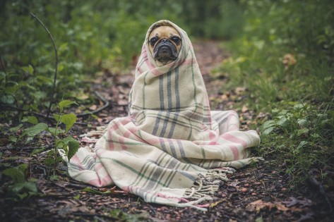 Leishmaniosi cane terapie naturali