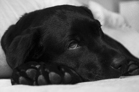 Tumore nel cane