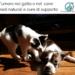 Tumore nel gatto e nel cane terapie naturali
