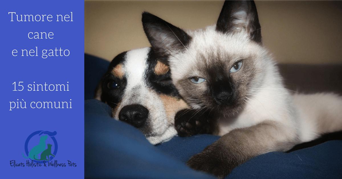 Tumore nel cane sintomi