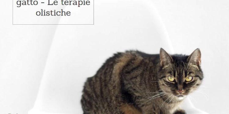 Calcoli Renali Nel Gatto Operazione Come Aiutare Il Gatto Elicatsit