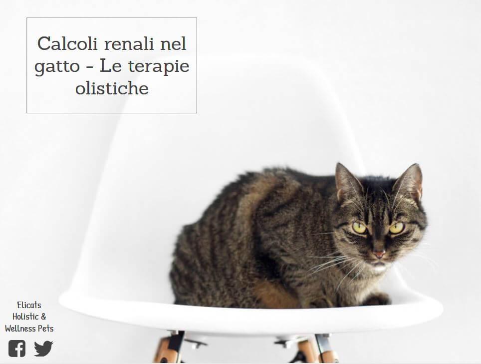 calcoli renali nel gatto le terapie olistiche