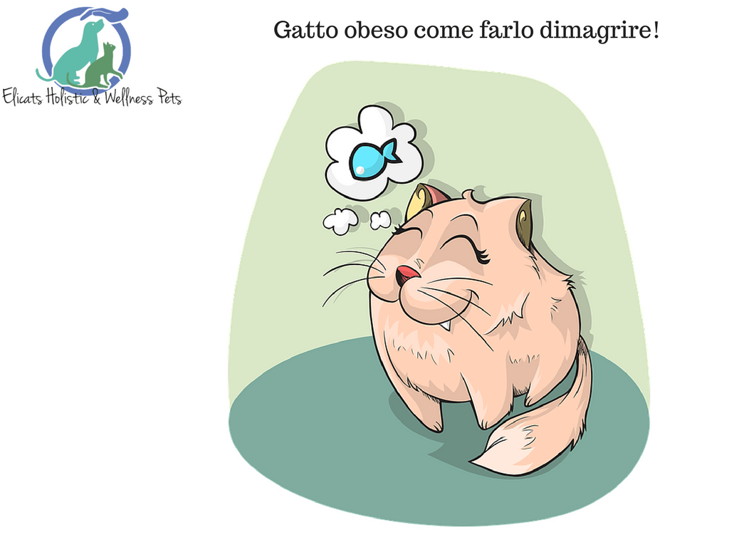 Gatto obeso come farlo dimagrire