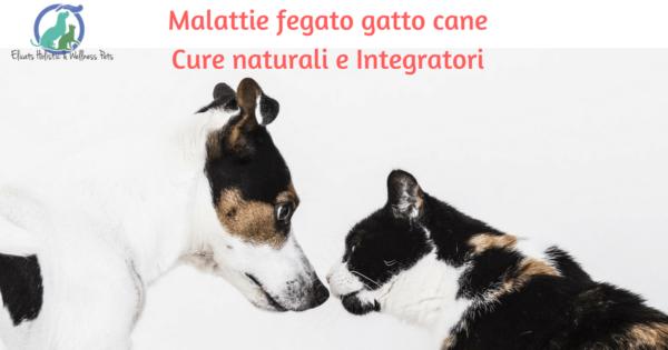 Malattie fegato gatto cane