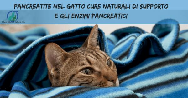 Pancreatite nel gatto Cure naturali