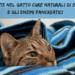 Pancreatite nel gatto Cure