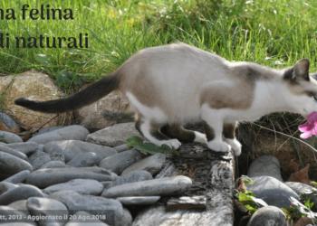 gatto con asma