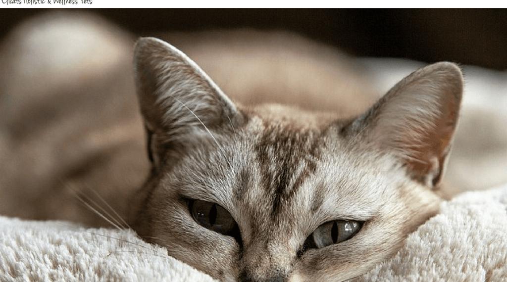 gastrite cronica e dimagrimento