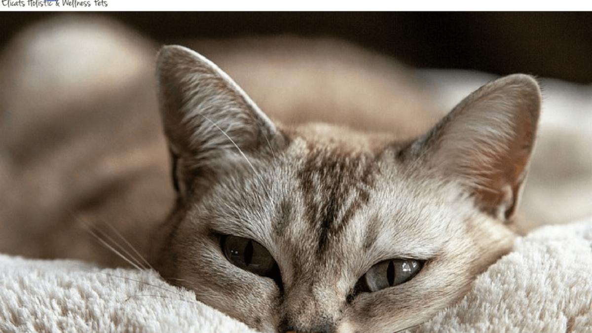 """Giardia gatto rimedi naturali. 5 Replies to """"Giardia diéta."""""""