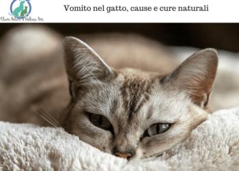 vomito gatto