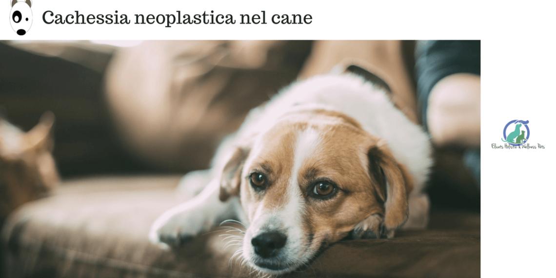 Cachessia neoplastica tumore e alimentazione cane