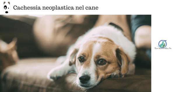 Cachessia neoplastica nel cane Il tumore e l'alimentazione