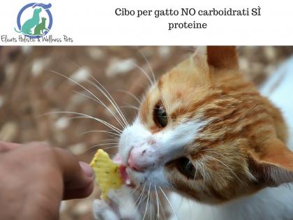Cibo per gatto