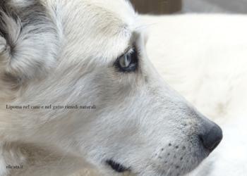 Lipoma nel cane e nel gatto rimedi naturali