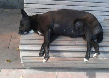Tumore mammario nel cane cure naturali