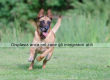Dermatite atopica cane cura immunoterapia regione for Displasia anca cane sintomi