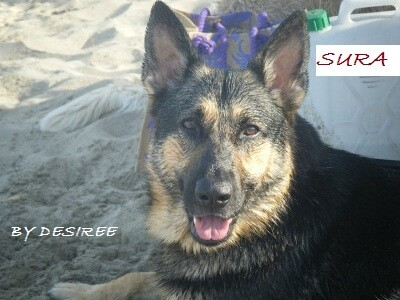 Elicats displasia anca nel cane gli integratori utili for Displasia anca cane sintomi