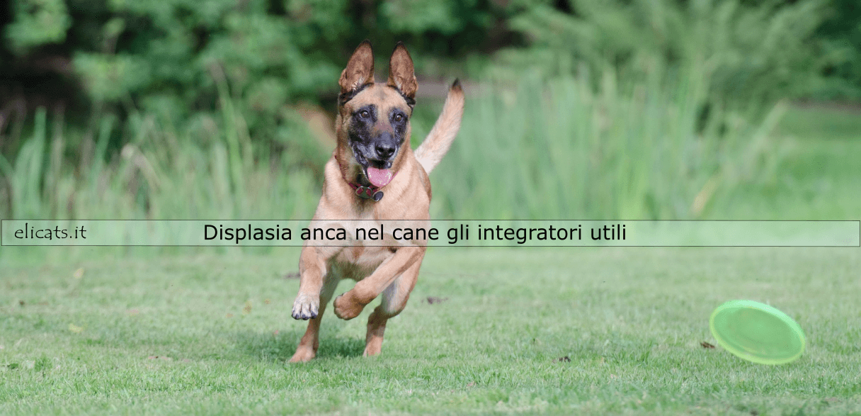 Displasia anca nel cane integratori