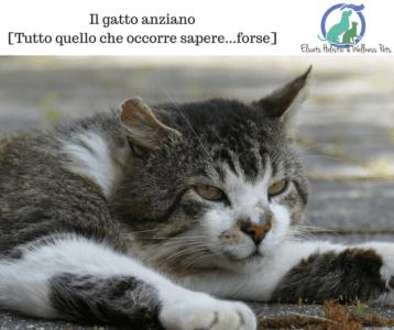 il gatto anziano