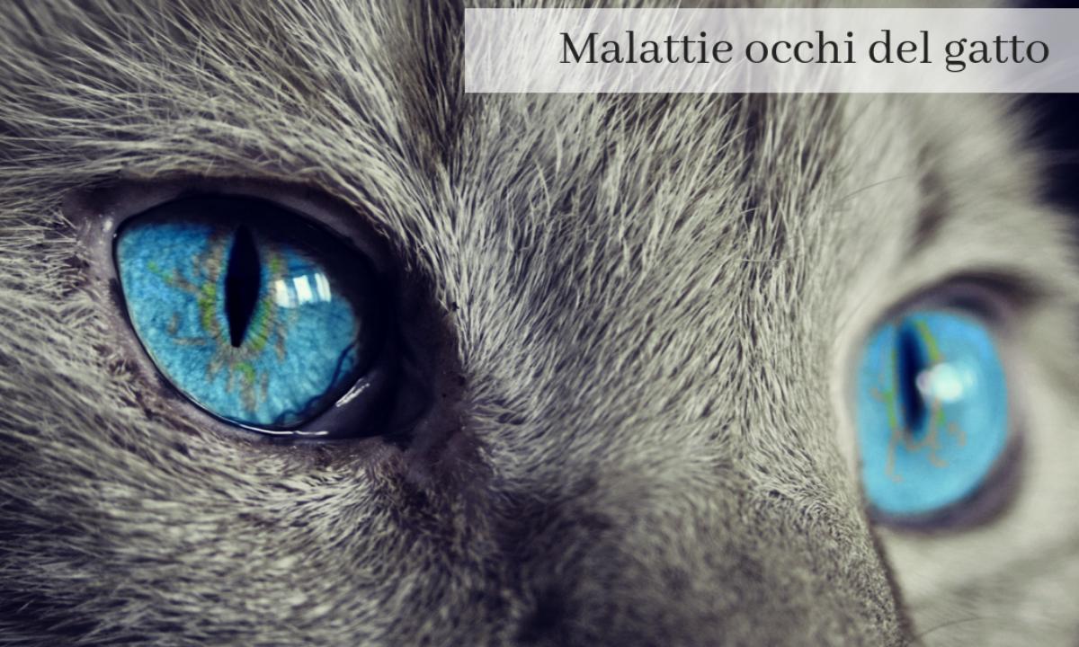 Gatto Occhio Semichiuso Cosa Fare Per Infezione Ed Infiammazione