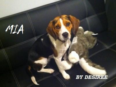 infiammazione intestinale nel cane IBD, Infiammazione intestinale nel cane IBD