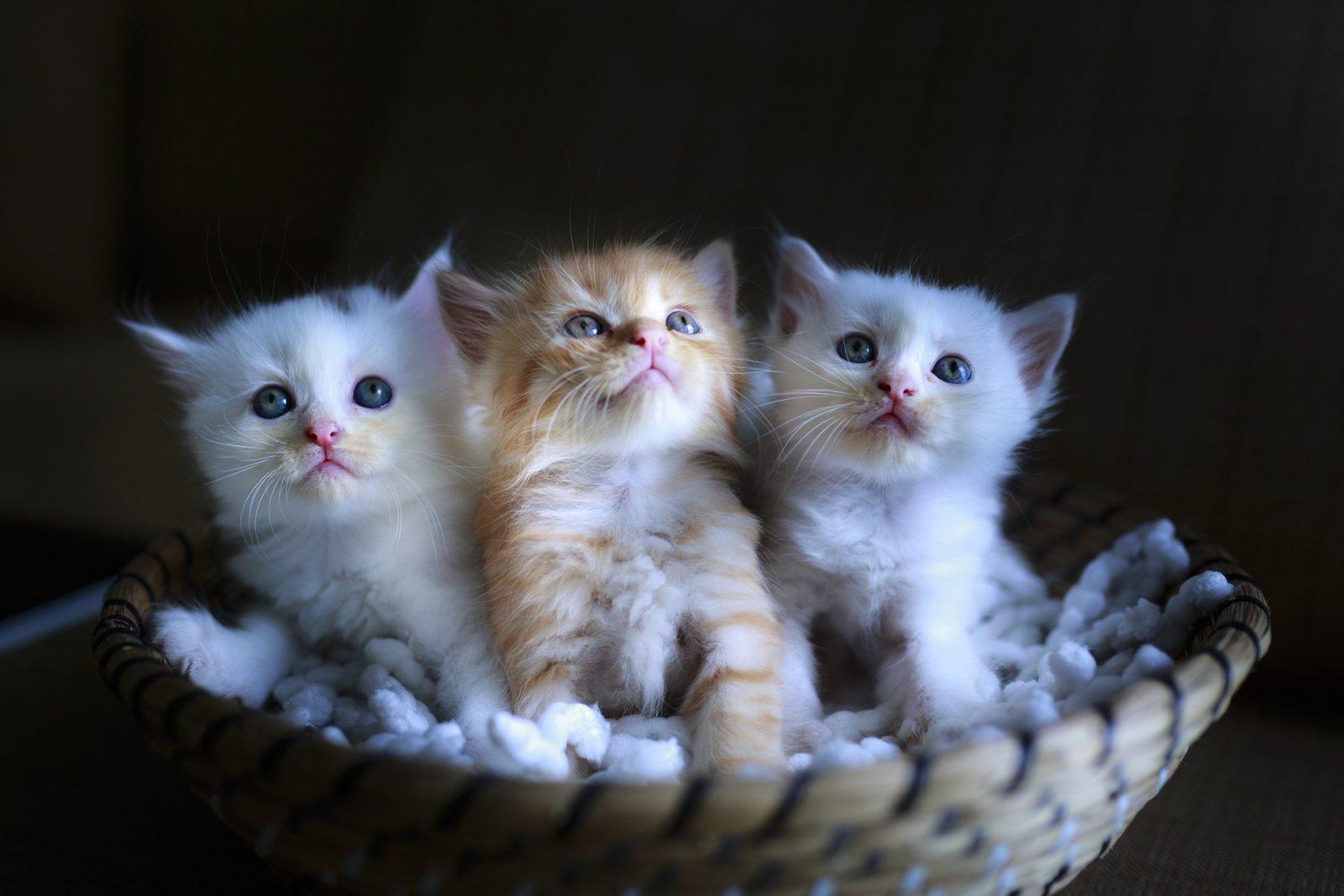 Farmaci coccidiostatici gatto