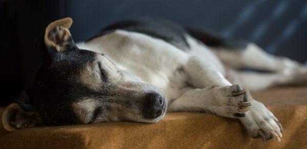 epilessia cane terapie