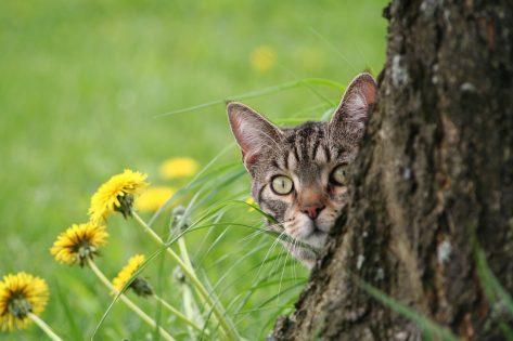Felv Fiv gatto terapie naturali, Felv Fiv gatto Cure naturali Interferone omeopatico