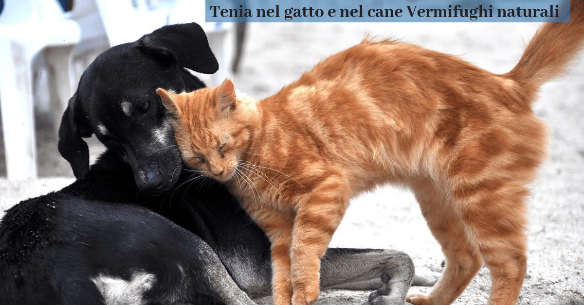 Tenia nel gatto cura