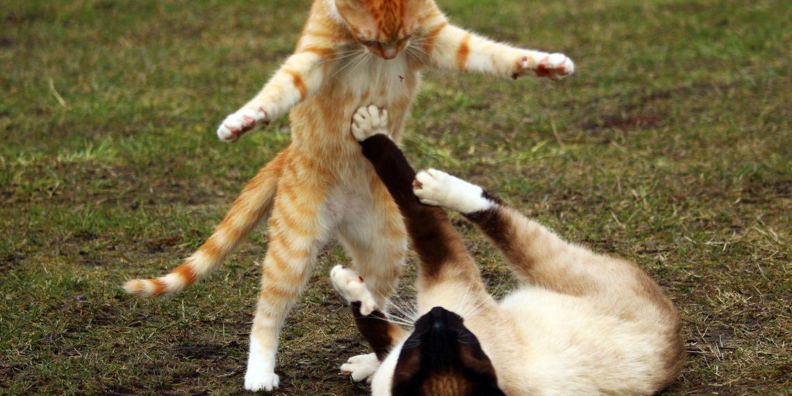 Interferone omeopatico gatto