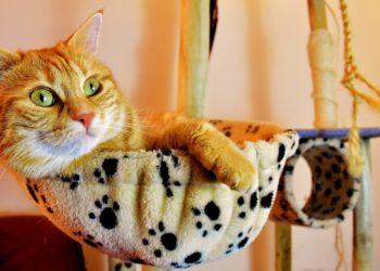 Diabete nel gatto Alimentazione