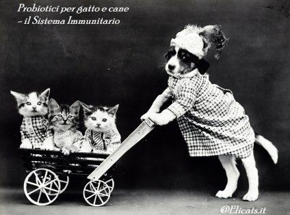 Probiotici per gatto e cane il Sistema Immunitario
