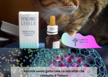 Synchro Levels gatto cane