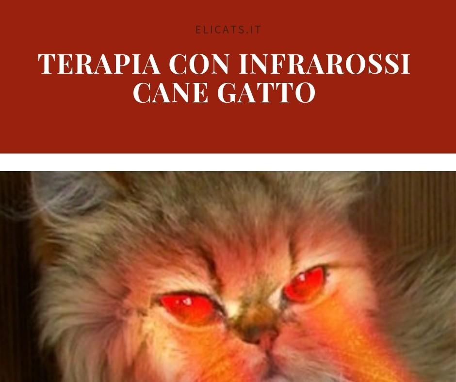 infrarossi cane gatto