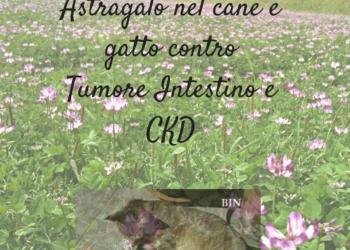 Astragalo nel cane e gatto contro Tumore Intestino e CKD