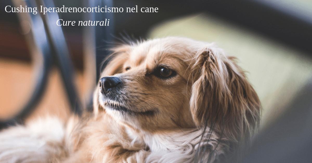 Cushing Iperadrenocorticismo nel cane
