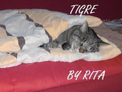 Fipronil gatto, Fipronil gatto Rimedi naturali pulci gatto Spot-on meno tossici!
