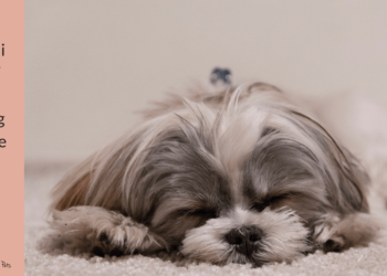 Rimedi naturali Cushing nel cane