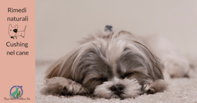 Rimedi naturali Cushing nel cane, Rimedi naturali Cushing nel cane