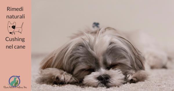 Cushing nel cane Rimedi naturali