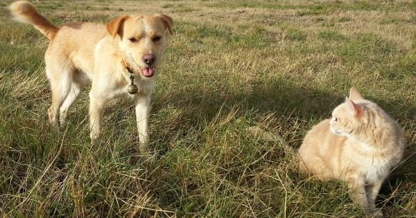 ozonoterapia nel cane e gatto, Ossigeno-ozonoterapia nel cane e gatto curare diverse patologie